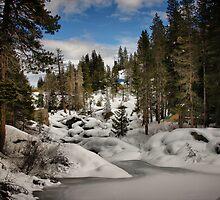 Winter Wonderland by Barbara  Brown