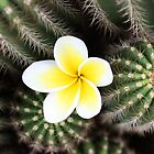 frangipani and cactus by Karlee Lynam