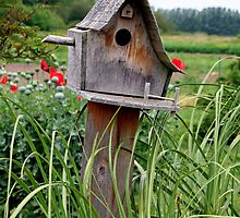 """Bird House"" by Lynn Bawden"