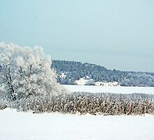 Winter in Sweden # 5 by Paola Svensson