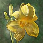 Daylily by Jeff Jackson