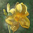 Daylily by Jeff Jackson