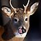Young Whitetail Buck - White-tailed Deer by Jim Cumming