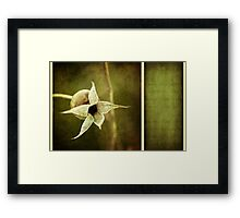 rose hip Framed Print