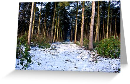 Snow Path by Trevor Kersley