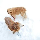 muffin & Riley snow buddies by Jeff Stroud