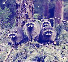 raccoons . tacoma, washington by sara montour
