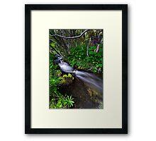Little Lupin Creek Framed Print