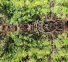 Mangrove Reflections by KimIV