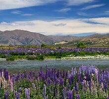 Lupin lined Ahuriri River - NZ by Norman Repacholi