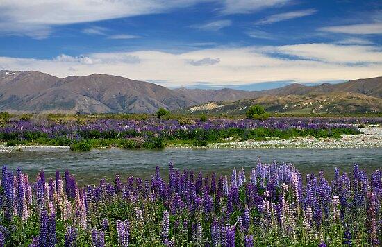 Lupin lined Ahuriri River - NZ by Norman Repacholi