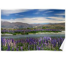 Lupin lined Ahuriri River - NZ Poster