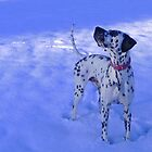 Julius in the snow featured in &quot;Animal Photography&quot; by The Creative Minds
