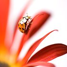 Ladybird - Nearly there! by Sarah-Jane Covey