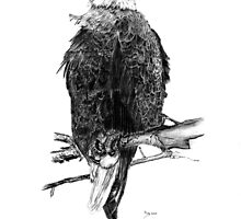 The American Bald Eagle in Charcoal by Russ Smith
