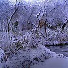 Beauty of Winter by Larry Trupp