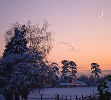 Snow Flock by Bradley Old