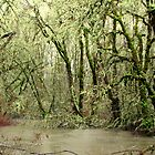 Forest Flood by scenebyawoman