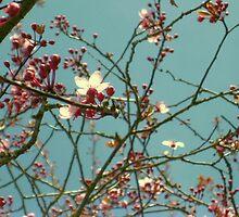 Cherry Blossom Sky by karolina