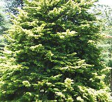 Tree (3796) by ScenerybyDesign