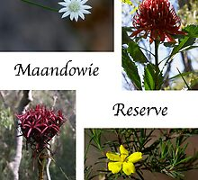 Maandowie Bush Reserve  ~  Loftus, NSW, Australia by Robert Elliott