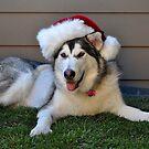 Wishing You a Doggone Great Christmas! by Ashley  Hernandez