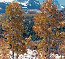 Mountain Aspens in the Rockies by AzCactus