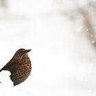 Winter Wildlife by Mark Ellison