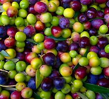 Olives by German SC