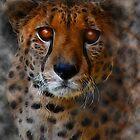 ~* Cheetah Spirit *~ by midnightdreamer
