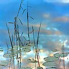 """Reflection - Reeds and Pond Lilies"" by T.J. Martin"
