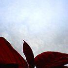 Poinsettia by Rowan  Lewgalon
