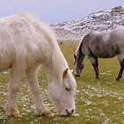 Cornwall:  Ponies Grazing at Roughtor by Rob Parsons