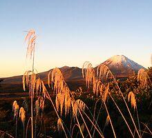 Mount Ngauruhoe at Sunset, Tongariro NP, New Zealand by Octoman