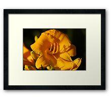 Deep Yellow Framed Print