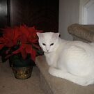 Snowball and Poinsettia by Marita McVeigh