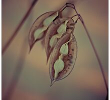 Pods I by Tia Allor-Bailey