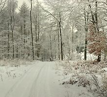 A Woodland Path in Winter by Jamie  Green