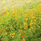 Yellow Flowers by jfsrulz