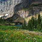Summer Wildflowers under Ptarmigan Wall by Octoman