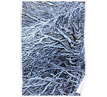 skeletal like trees - winter NI Poster