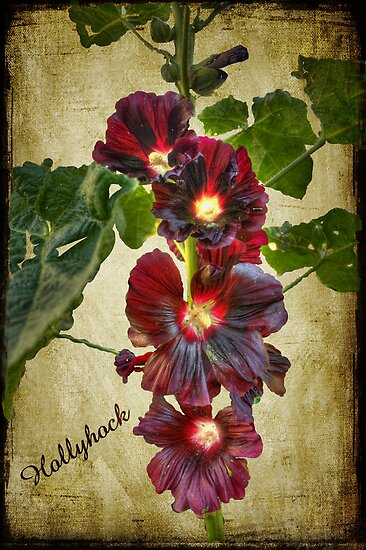 Hollyhock by Elaine Teague
