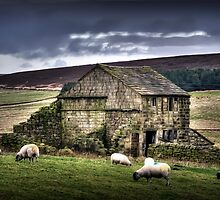 A barn and some sheep by Kurt  Tutschek