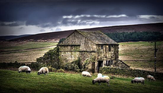 A barn and some sheep by Kurt  Tutschek