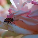 Rose Bug by Kazzii