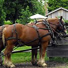 Historic Nauvoo Horses by Jan  Tribe