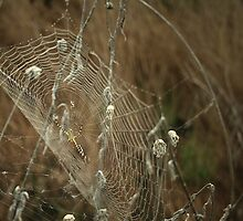 Wicked Web by Tia Allor