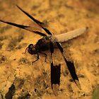 Lone Dragonfly by CG1977