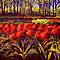 The Red Tulips in Keukenhof by sesillie