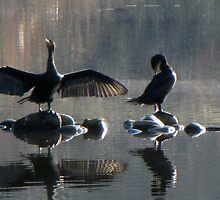 Double Crested Cormorants by CathyAdams